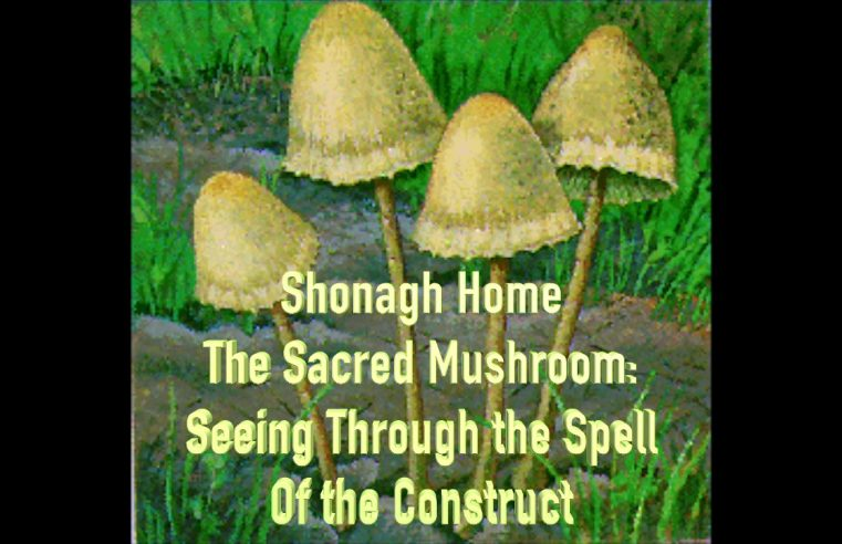 Sacred Mushroom Set & Setting
