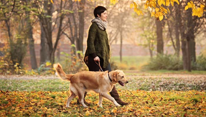 Improve Walking Your Dog On Leash