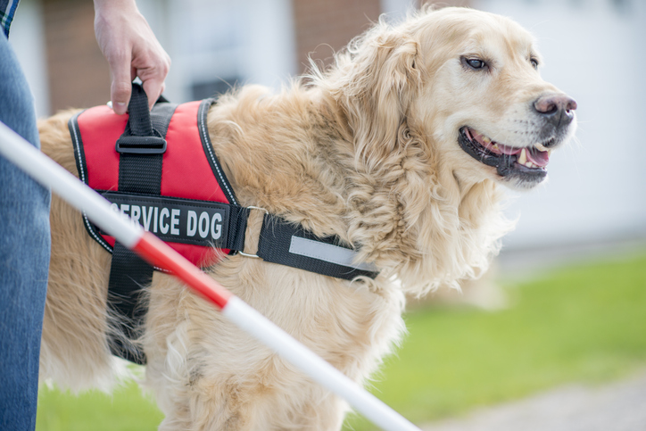 Service Dogs In Training – Learn About The Services