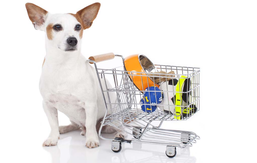 Here Is All You Need To Know Before Owning The Pet And Check If You Are Fit For Owning A Pet